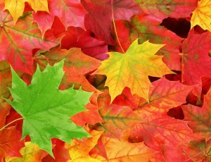 28f16-free_fall_leaves_shutterstock_61538884_web